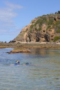 Snorkelling at Pebble Beach