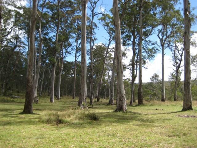 Polblue Campground - Barrington Tops NP