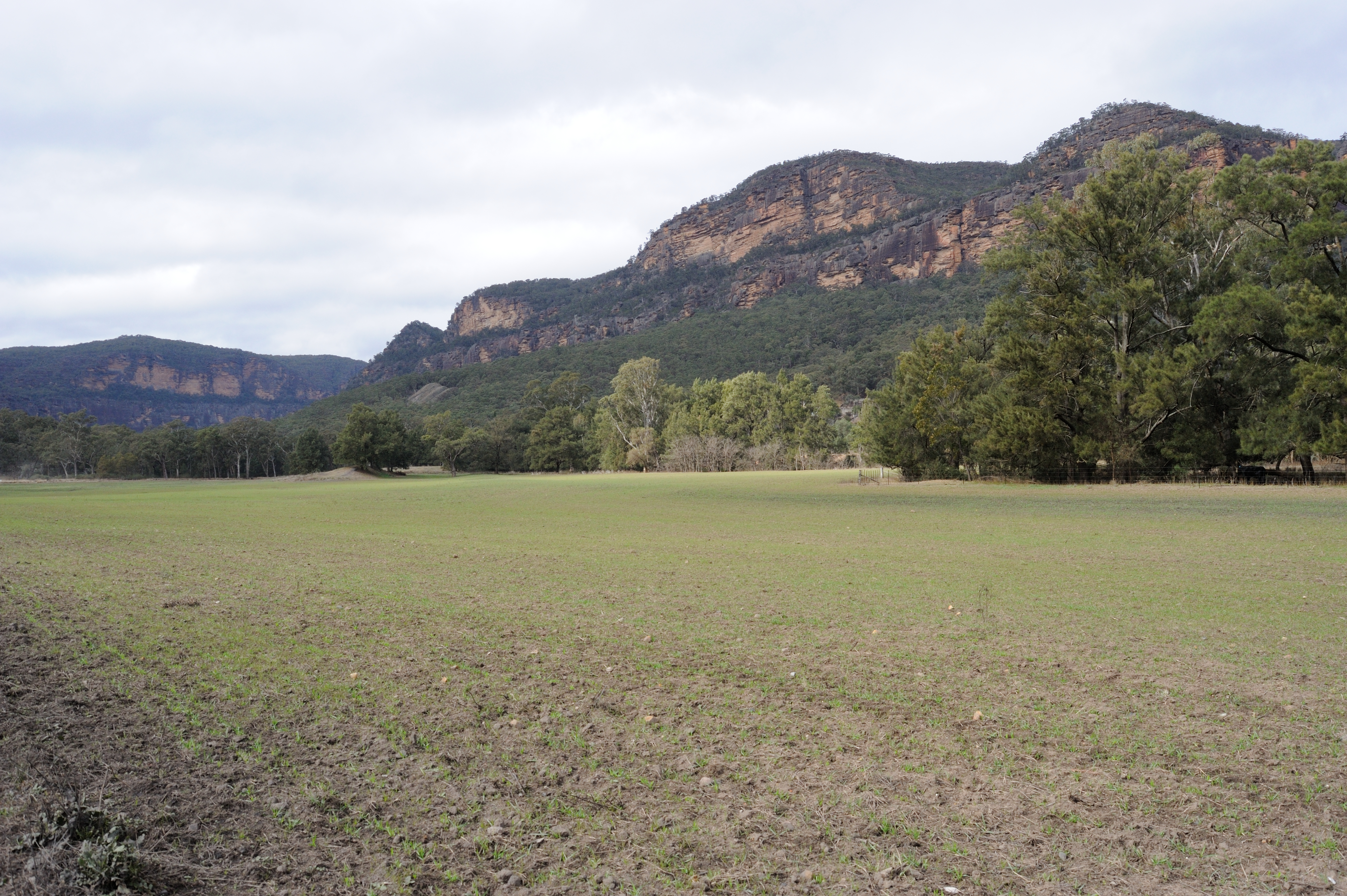 Near Coorongooba Campground - Wollemi National Park