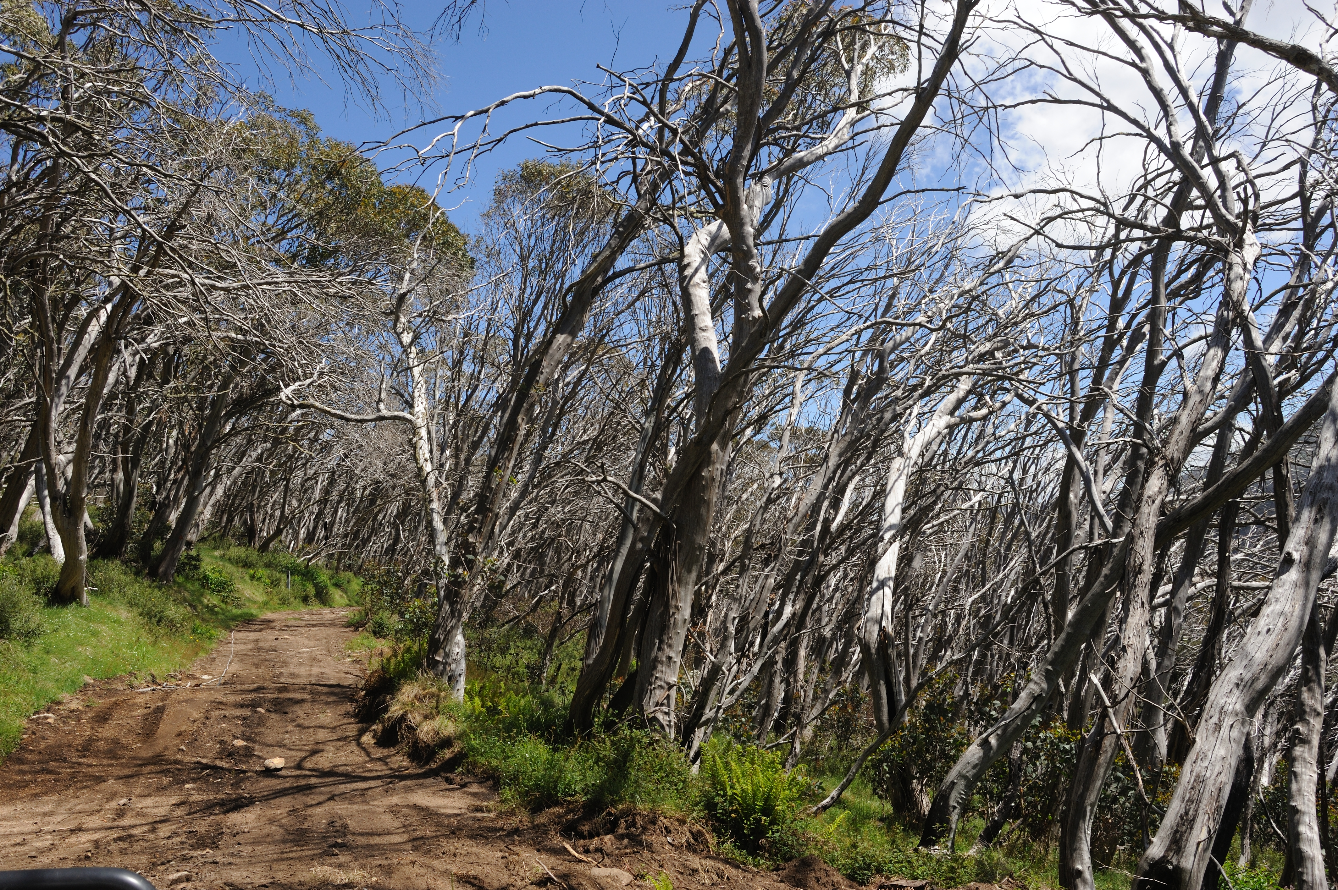 2006 Fire Damage - Clear Hills Track - Alpine National Park